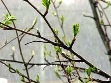 Стихи про весенний дождь детям
