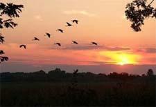 За что спасибо птицам? Стихи для детей