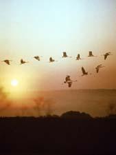 Перелётные птицы осенью. Стихи для детей