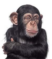Пословицы, афоризмы про обезьян