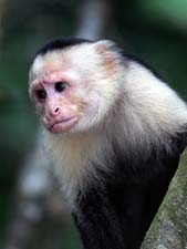Интересные факты из жизни обезьян