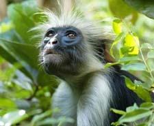 Рассказ про обезьяну детям