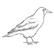 Raskraska Pereletnye Pticy Rossii