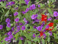 Красота растений. Рассказ детям