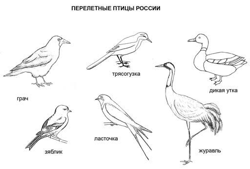 Перелетные птицы России. Раскраска