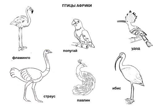 Птицы Африки. Раскраска