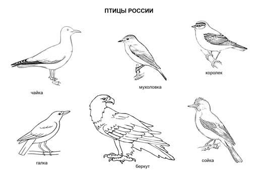 Птицы России. Раскраска