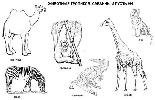 Животные тропиков, саванны и пустыни (6 рисунков)