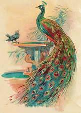Басню о птицах сочиняем сами