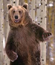 Сказочная история о диком животном медведе