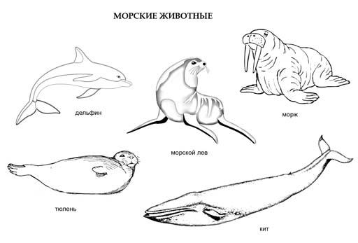 Морские животные. Раскраска