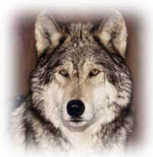 Басня собственного сочинения про волка и овец с моралью