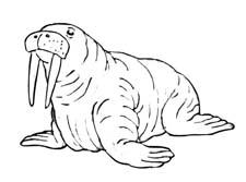 """Раскраска """"Морские животные"""""""