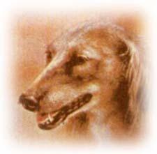 Басня собственного сочинения про охотника и собаку