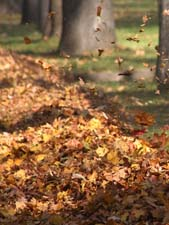 Стихи про осень Аполлона Коринфского