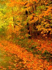 Осенняя жизнь растений