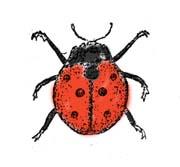 """Раскраска """"Полезные насекомые"""" с названиями"""