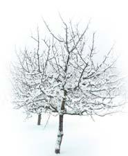 Как растения готовятся к зиме. Рассказ детям