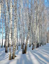 """Зимний сад"". Стихи о зимней природе"